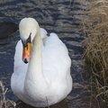 Fauna Birds 047