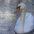 Fauna Birds 048