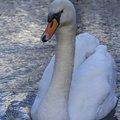 Fauna Birds 049