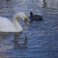 Fauna Birds 051