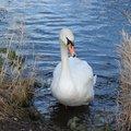 Fauna Birds 053