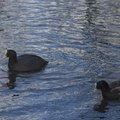 Fauna Birds 054