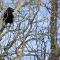 Fauna Birds 055