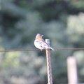 Fauna Birds 058