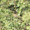 Fauna Birds 065