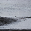 Fauna Birds 066