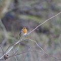 Fauna Birds 068