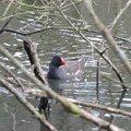 Fauna Birds 071