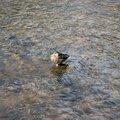 Fauna Birds 080