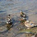 Fauna Birds 082