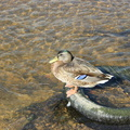 Fauna Birds 083