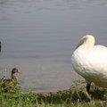 Fauna Birds 085
