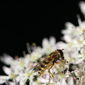 Fauna Insects 042