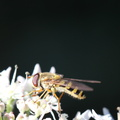 Fauna Insects 043