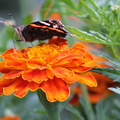 Fauna Insects 052