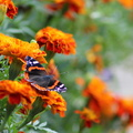 Fauna Insects 053