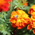 Fauna Insects 055