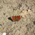 Fauna Insects 061