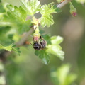 Fauna Insects 064