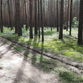 Nature Forest 043