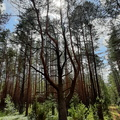 Nature Forest 050
