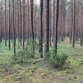 Nature Forest 053