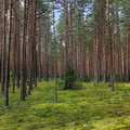 Nature Forest 054