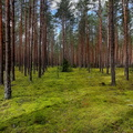 Nature Forest 055