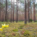 Nature Forest 059