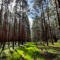 Nature Forest 060