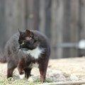 Fauna Mammals 047