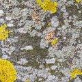 Nature Lichen 057