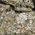 Nature Lichen 062