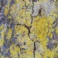 Nature Lichen 065