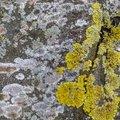 Nature Lichen 066