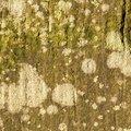 Nature Lichen 054