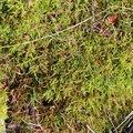 Nature Moss 042