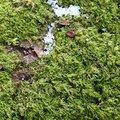 Nature Moss 043