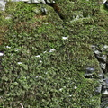 Nature Moss 044