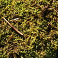 Nature Moss 030