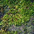Nature Moss 033