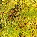 Nature Moss 035