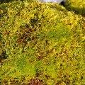 Nature Moss 036