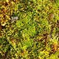 Nature Moss 037