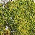 Nature Moss 038