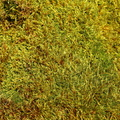 Nature Moss 039