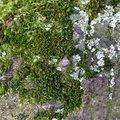 Nature Moss 040