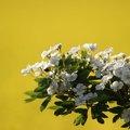Nature Flowers 007