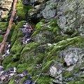Rock Cliff 051