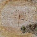 Nature Tree Rings 022